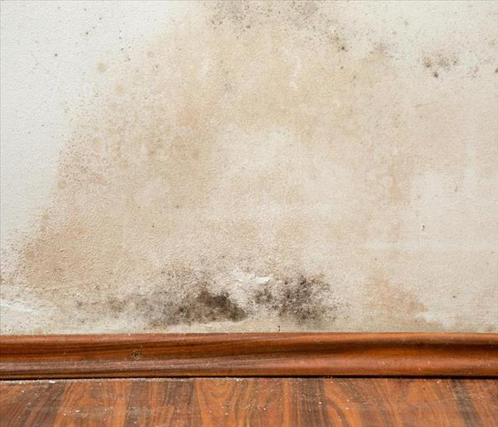 Mold Remediation Can my home have a Mold Problem in Bourbonnais, IL?