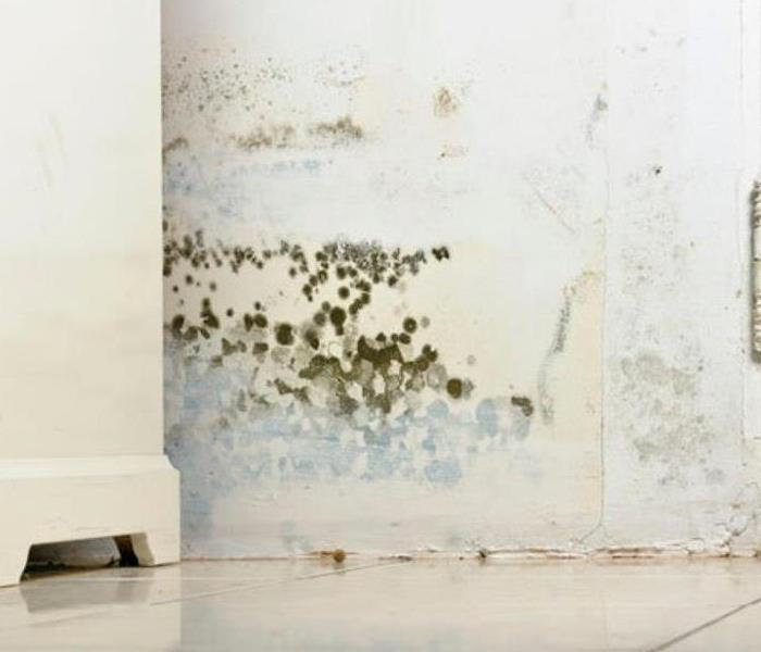 Mold Remediation Mold in your home in Gilman.  What is it?