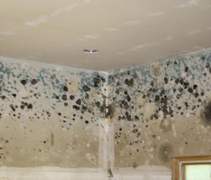 Mold Remediation Keep mold out of your Gilman home